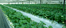 ジャット式高設栽培システムの販売