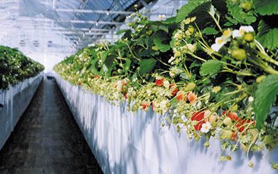 高設栽培システム